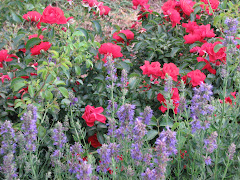 Anise Hyssop and Roses 2009