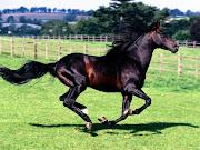De asemenea, puteti mari frumoasele poze cu cai, si le puteti descarca .