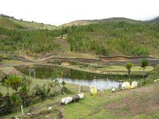 Estación piscícola de Cascapampa Huancabamba