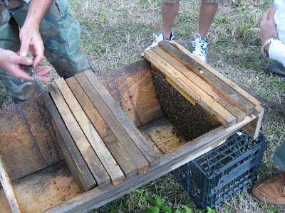 He Tops The Hive With A Simple Board Weighed Down By Bricks. He Places Two  Pieces Of Wood Above The Top Bars To Provide The Bees With Some Ventilation.