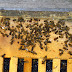 Dead bees found in US and Canada