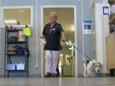 På Djursjukhuset
