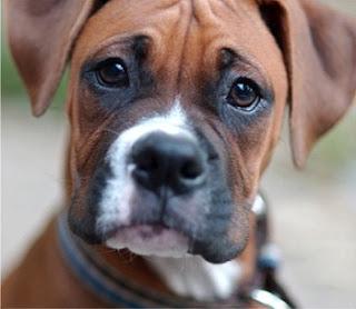 Jak a čím krmit psa? Granule nebo maso?