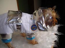 astronauta canino