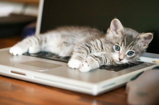 gato+en+teclado.jpg