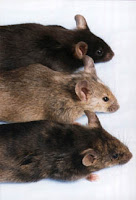 Cottage Country Pest Control can manage your mice/rodent problems