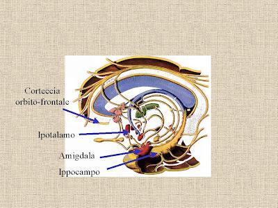 configurazione cerebrale