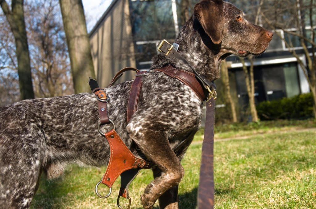 The Dog Wagon | sweet juniper!