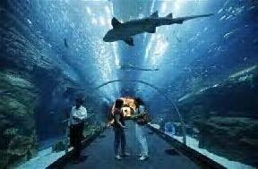 Mall Dubai Akuarium Terbesar Di Dunia