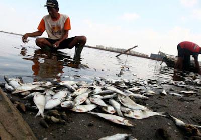 stylo lead afandy: Pemanasan Global :Kesan ke atas Alam Sekitar