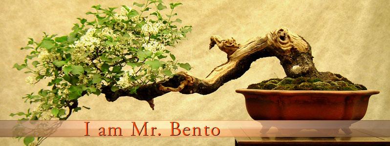 I am Mr. Bento