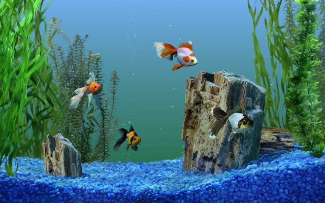 Oggigiorno l 39 imac si trasforma in un acquario - Acquario in casa ...