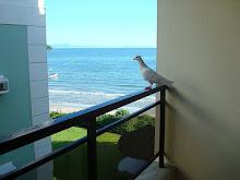 Si a tu ventana llega una paloma... trátala con cariño, es mi persona.