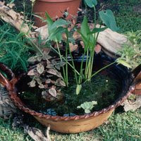 From the pondlady 39 s pad flower pot pond for Pond in a pot with fish