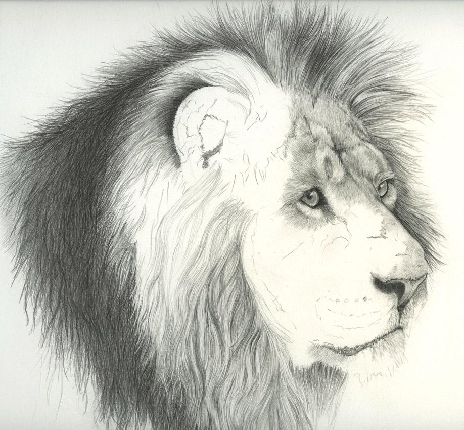 Simple animal drawings in pencil