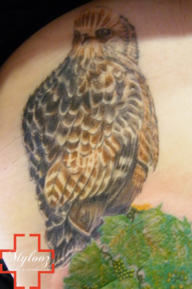 Animal Tattoo Designs Tattoos Gallery And Art Of