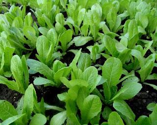 Tender greens worthy of real ingredients