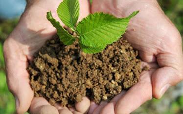 Plante uma árvore!!