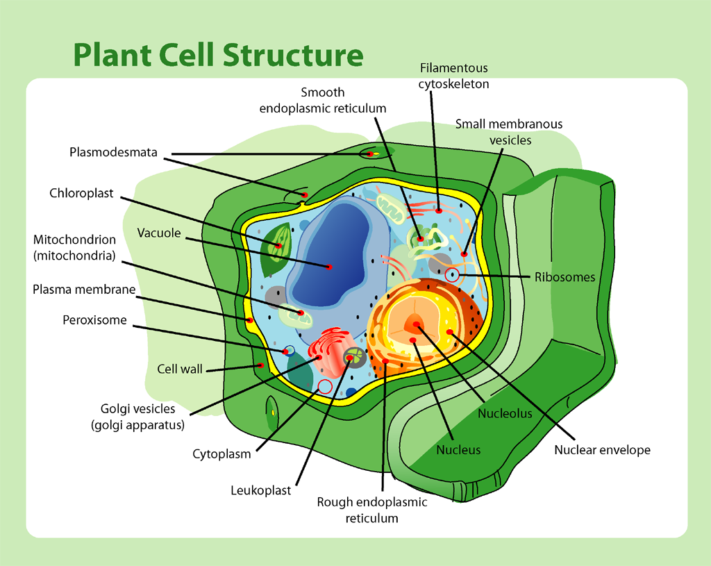 1970 mens fashion plant cell