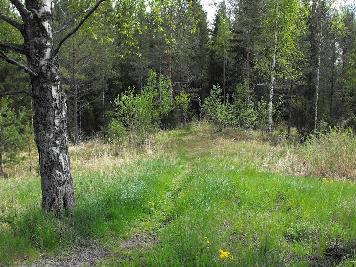 En stig till skogan