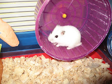 Minha Hamster Nikita