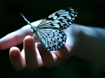 Dear friend, before you go, please touch the butterfly and let it&#39;s magic fill your day