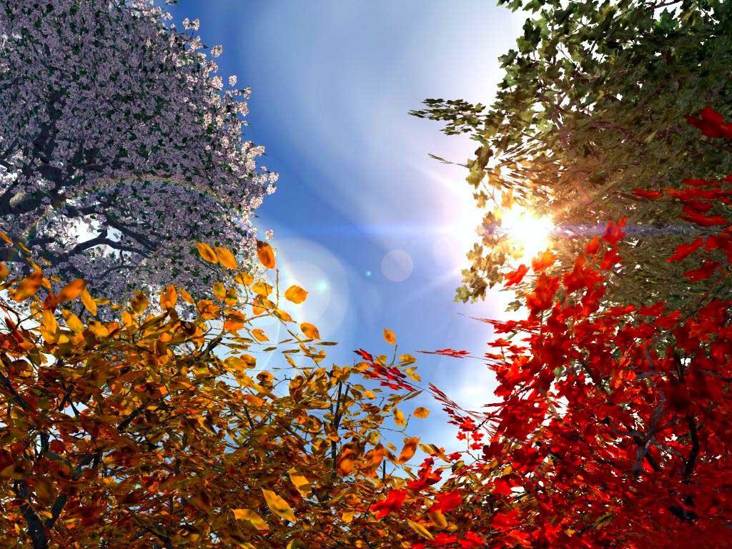 http://3.bp.blogspot.com/_PyzGklHH3A4/THRKhWzbg6I/AAAAAAAAANQ/13RDkD23mXs/s1600/HD+wallpaper+Nature+sky.jpg