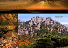 2009 Taller de tardor: 17, 23, 24 i 25 d'octubre