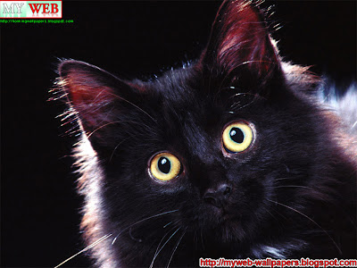 wallpapers cat. cat wallpapers cat pictures