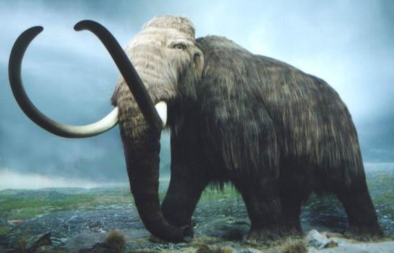 gambar hewan purba, binatang purbakala, dinosaurus masa lampau, gajah berculu dua, gading panjang