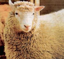 Uma ovelha na história da ciência