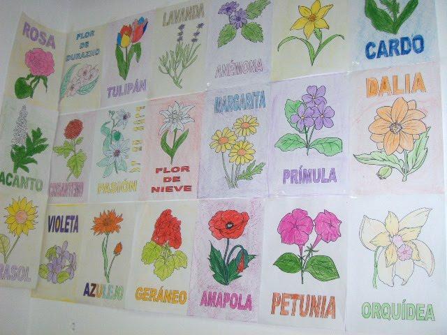 LORENA: LAS PLANTAS