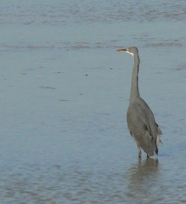 Close up of the heron