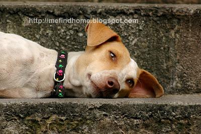 Adopt a homeless dog! Adopt Emil!