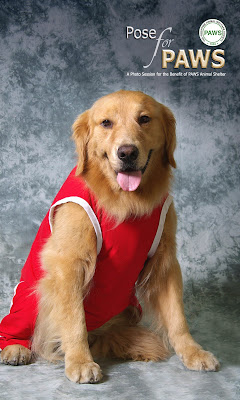 Sporty the Retriever Poses for PAWS!