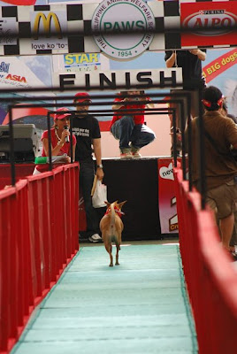 A photo-finish for Pinoy dog Poypoy!