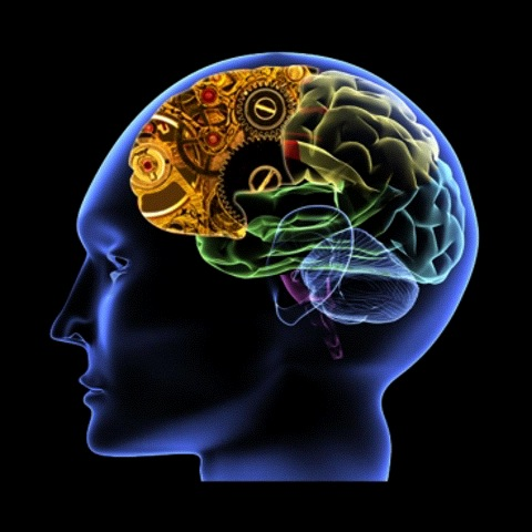 neurology ile ilgili görsel sonucu