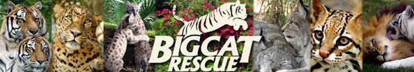 I Love Big Cat Rescue!