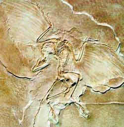 Fósil arqueropterix