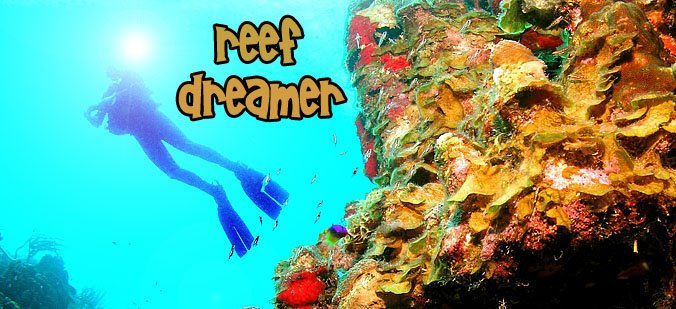 Reef Dreamer