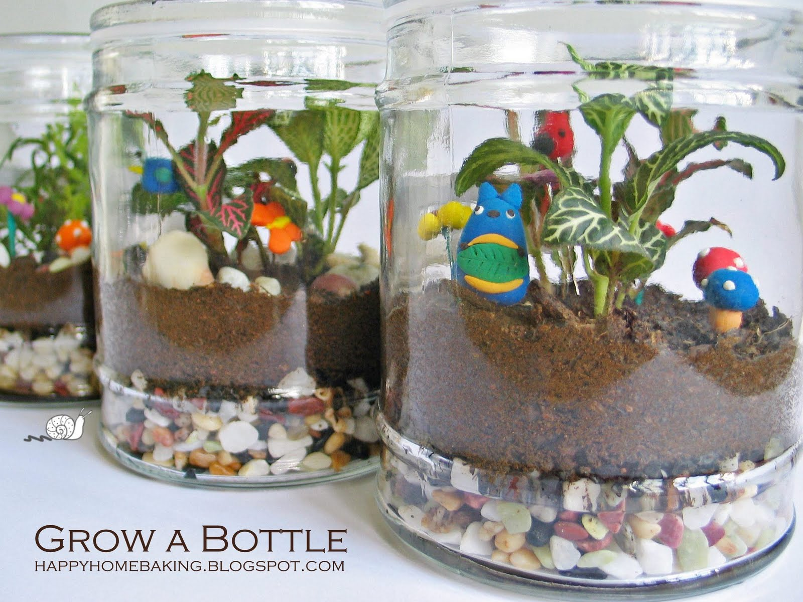 how to look after terrerium plants