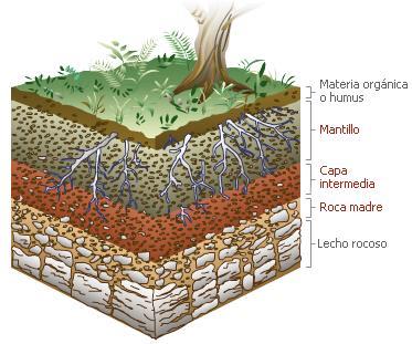 Cae estructura del suelo for Como estan formados los suelos