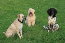 Sadie, Caleb & Gideon