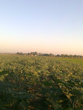 Farm's