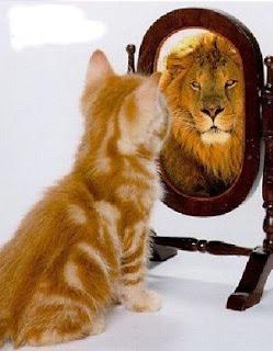 Descubre la Fiera que llevas dentro Gato-leon
