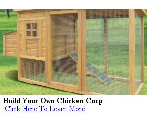 Recommended Reading 'Building A Chicken Coop'