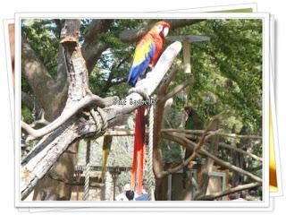 red blue gold parakeet