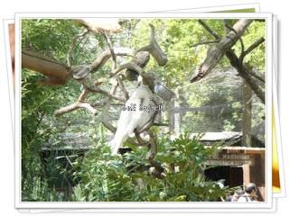 all white parakeet