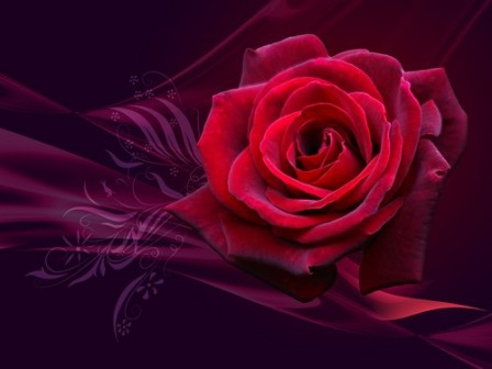 Free Wallpapers Of Roses. Free Valentines Roses