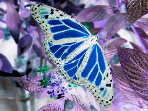 Postavi sliku i zatrazi sledecu - Page 8 Butterfly_rev_500x375